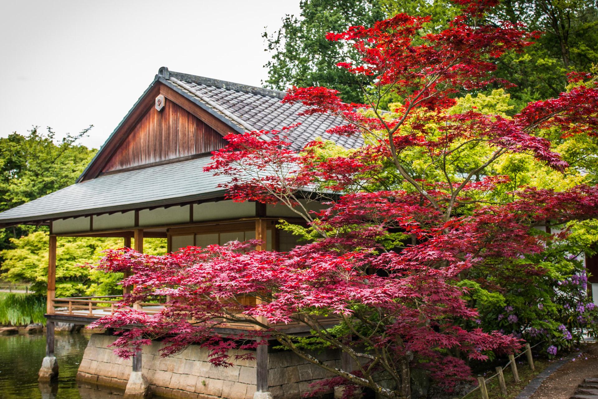 Imodcloud Au Jardin Japonais D Hasselt