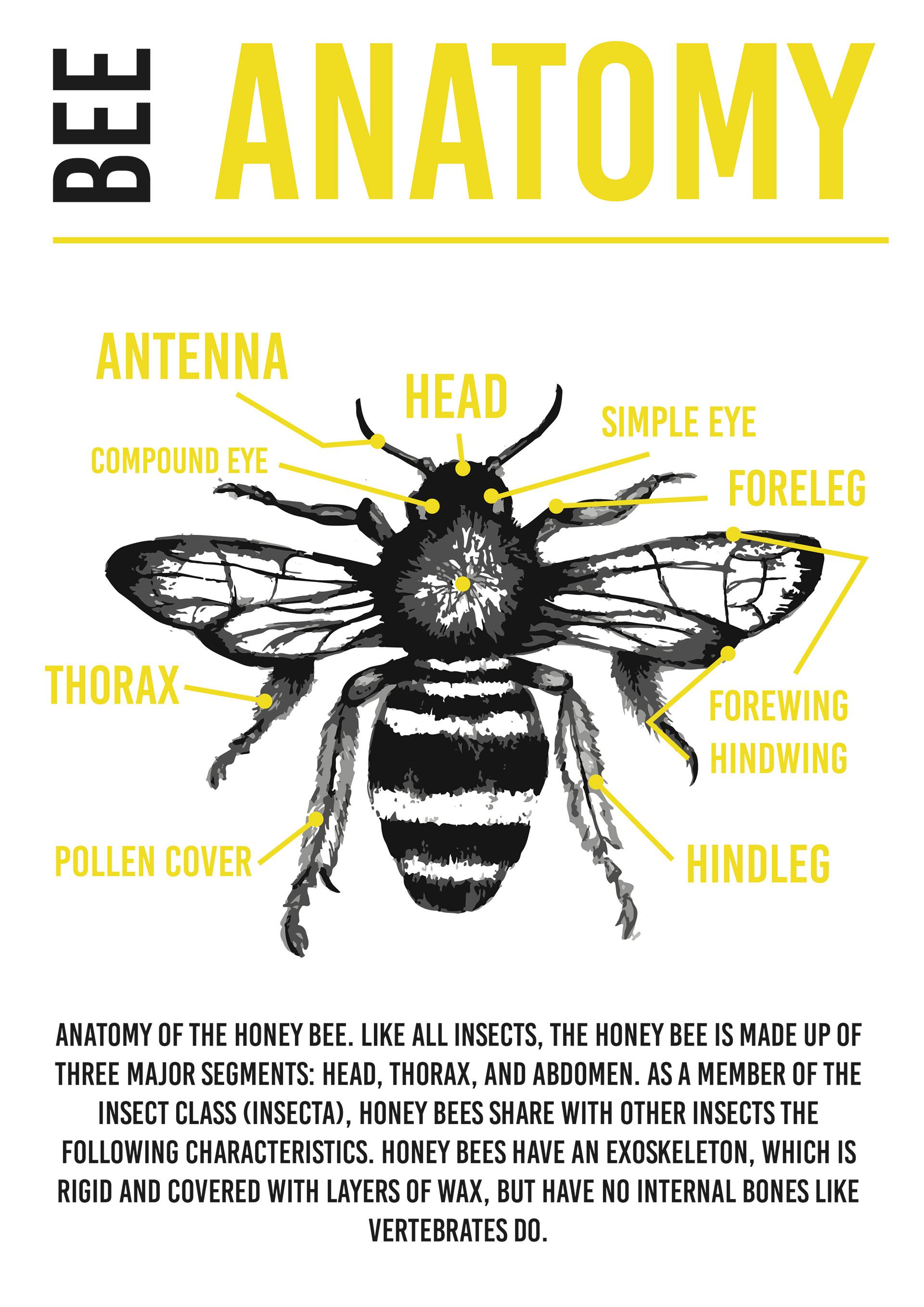 Katie Ledgerwood - Bee Booklet