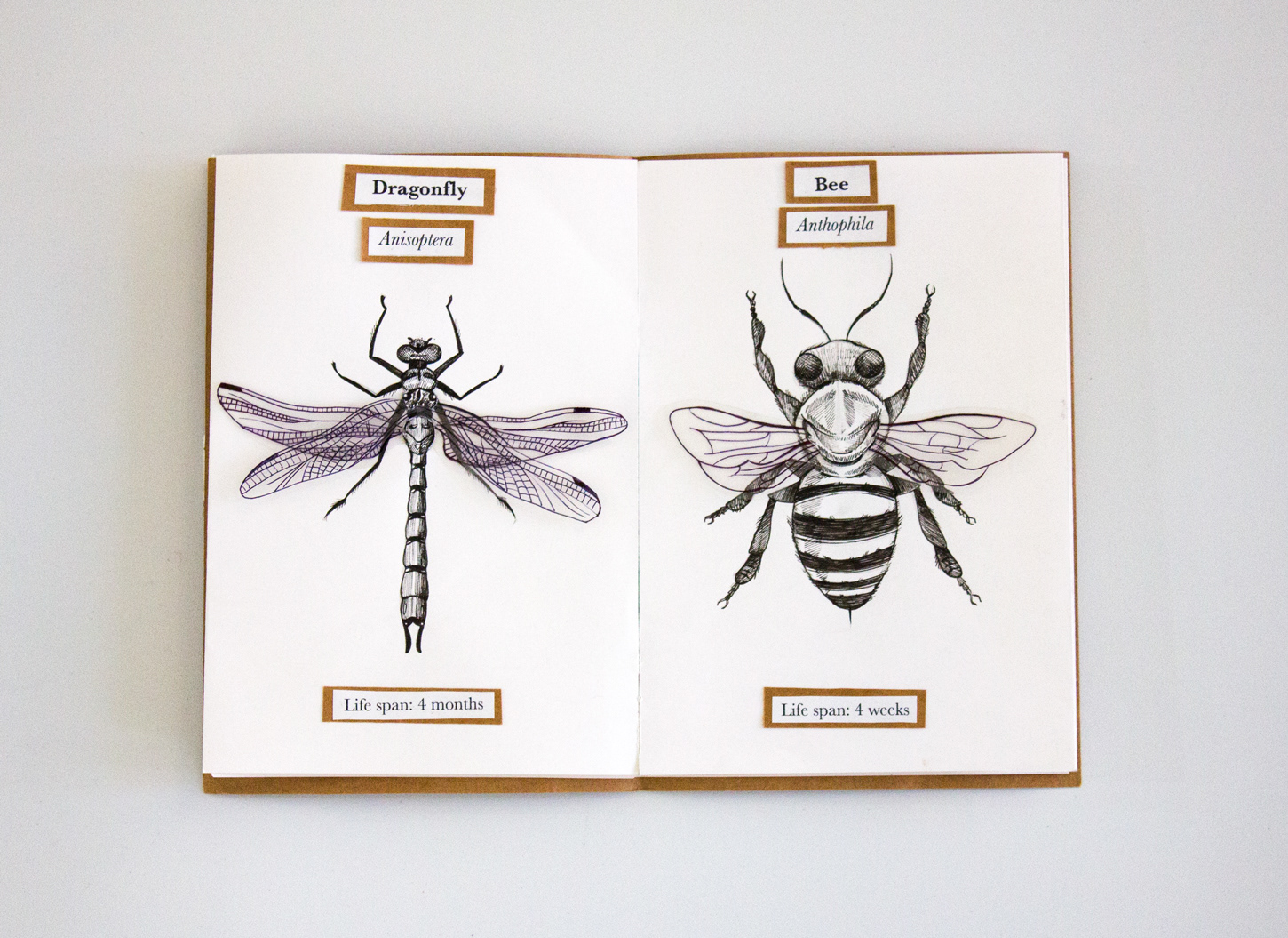 life compared to an insect the ephemera