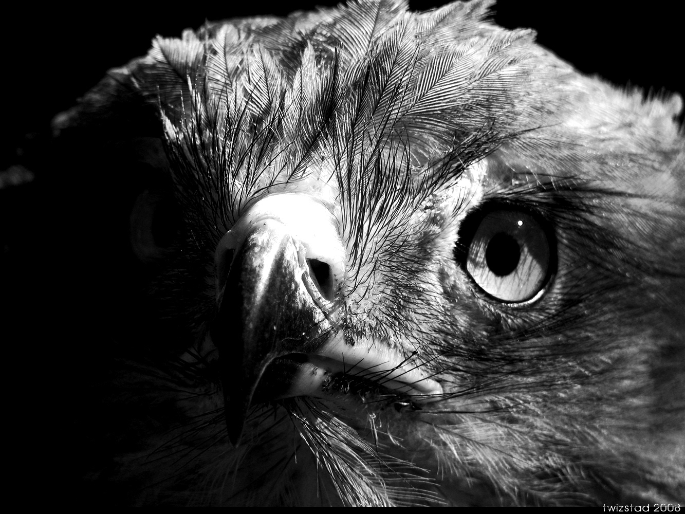 Some black and white eagle photos i took way back when