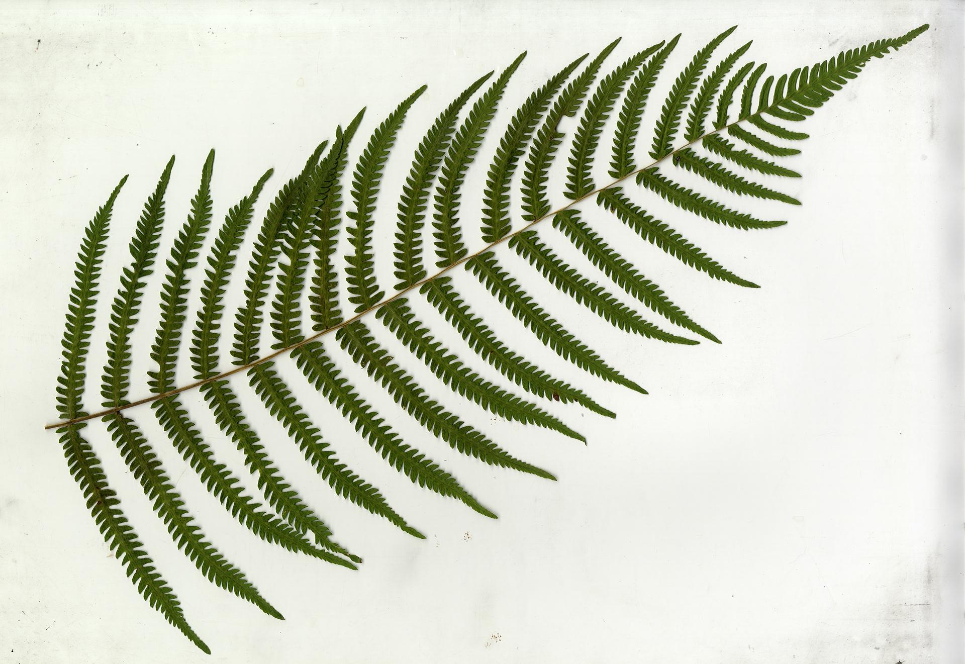 Joe Nisbett   Landscape Architect Student Portfolio - Anatomy of a Plant