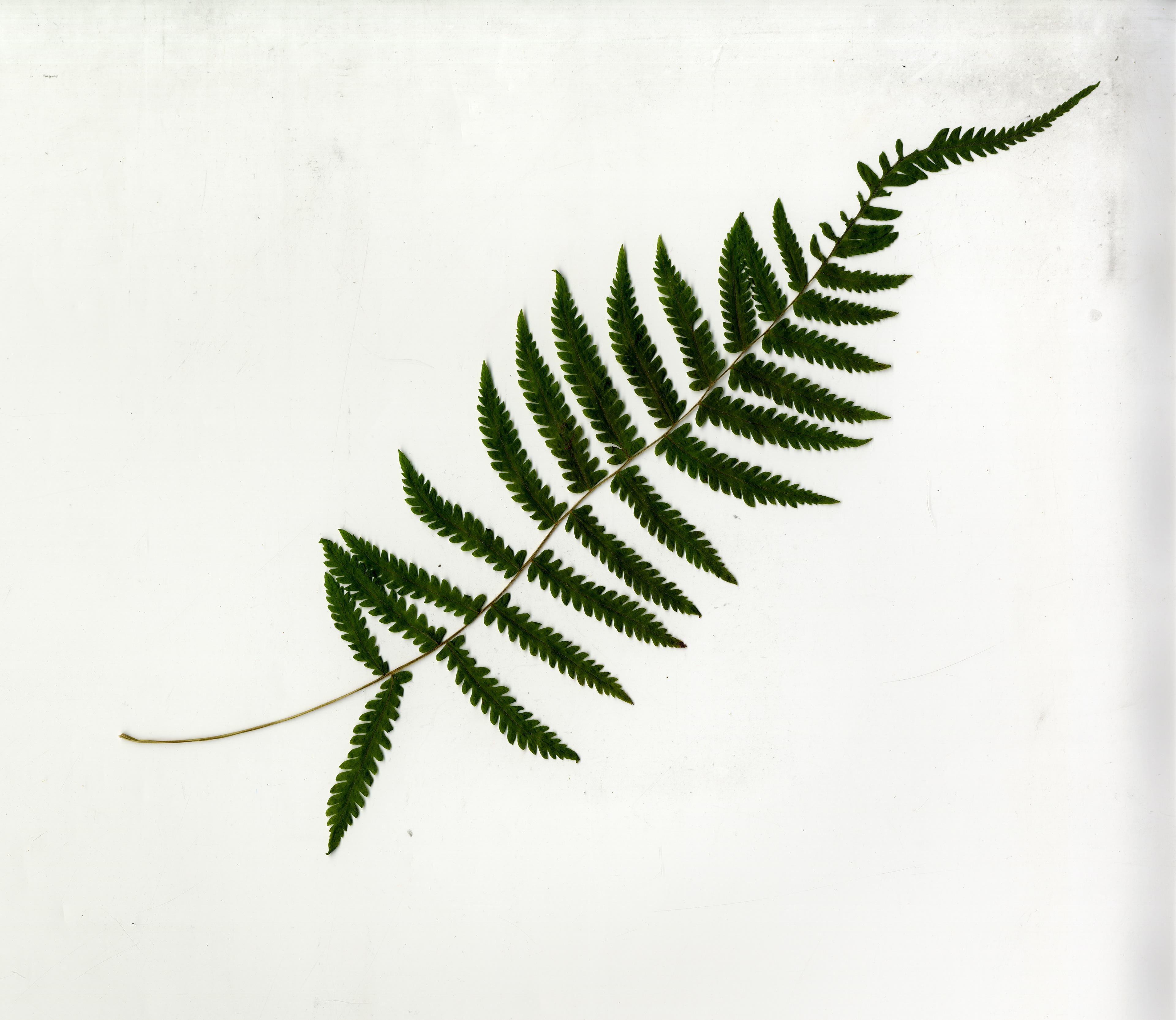 Joe Nisbett Landscape Architect Student Portfolio Anatomy Of A Plant