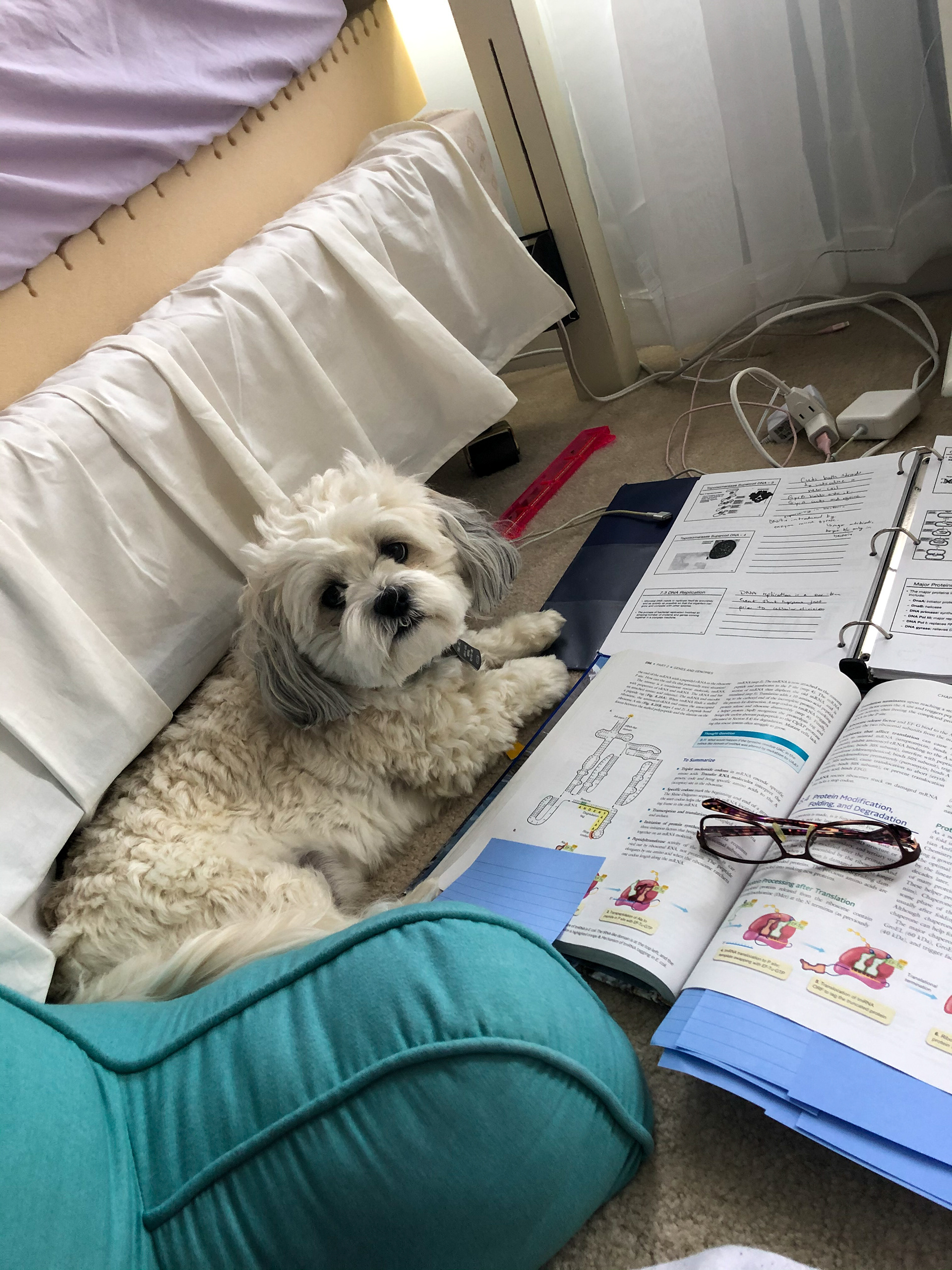 Hannah Angelella and her pup Louie studying together for a Microbiology test on April 29th, 2020. Hannah Angelella  |  Westminster, Maryland.