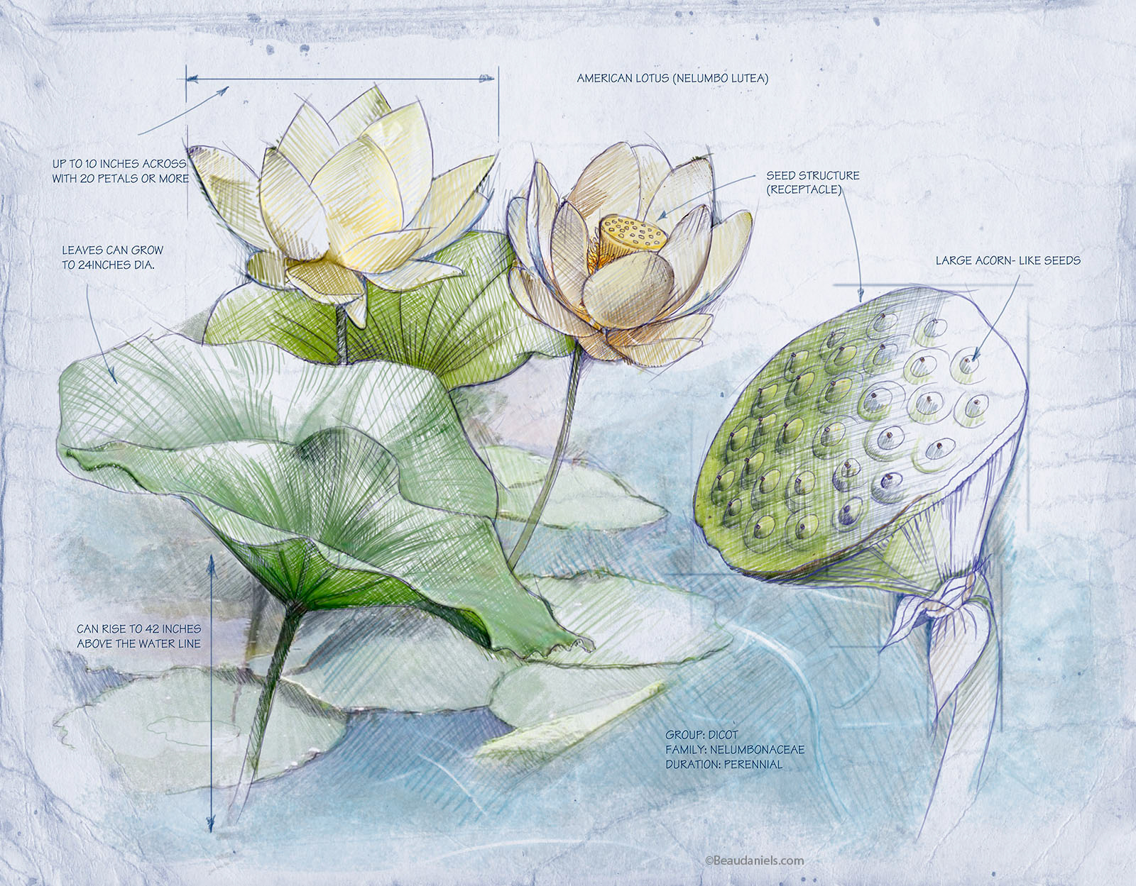 Technical Illustration Beau And Alan Daniels Wetlands Infographics